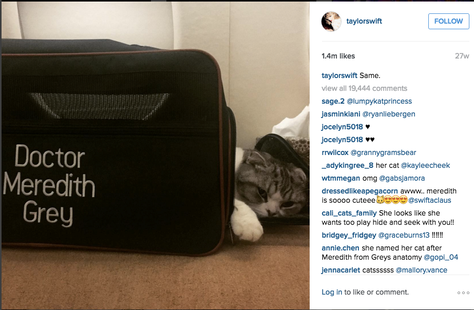 Taylor Swift's cat sleeps on a private jet